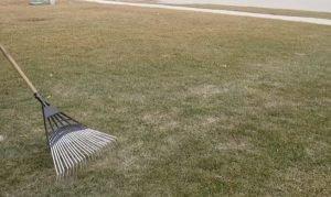 lawn care in spring season